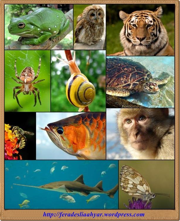 Makalah Biologi Keragaman Hewan Vertebrata Dan Invertebrata